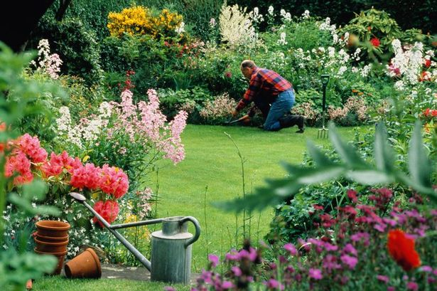 Six ways to make your garden a money-saving investment this summer – Daily Record